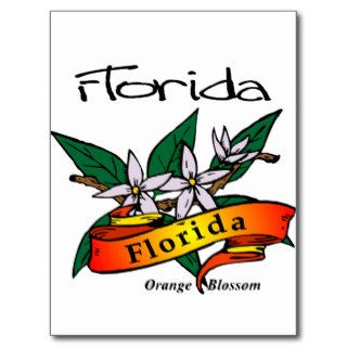 Florida State Flower Orange Blossom Post Cards