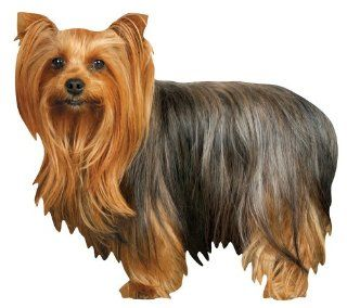 Paper House M 0416E 6 Pack Die Cut Refrigerator Magnet, Long Haired Yorkie
