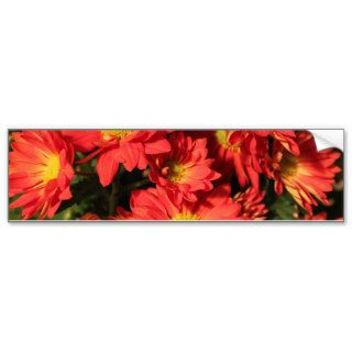 Golden,orange color daisy flowers. bumper sticker