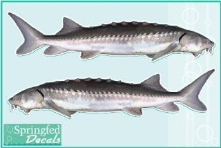 "White Sturgeon Vinyl Fish Decal 8"" Set of 2 Car Truck Window Sticker"