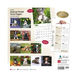 American Pit Bull Terrier Puppies 18 Month 2014 Calendar (Multilingual Edition) Browntrout Publishers 9781465008947 Books