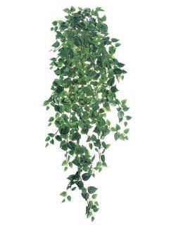 "51"" Medium Philodendron Hanging Bush x18 w/730 Lvs. Two Tone Green (Pack of 6) Grocery & Gourmet Food"